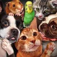 bigstock-Pet-Group-90298439